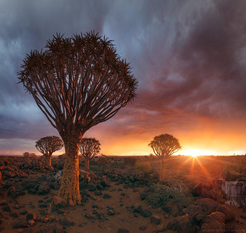 намибия, свнт, закат, солнце, луч, алоэ, дерево, колчанное, тучи, гроза, дождь, ливень, путешествия, Африка, Намибия, пустыня, Namibia, travel, africa, sky, sunset, sun, light, clouds, desert, explore, south Намибияphoto preview