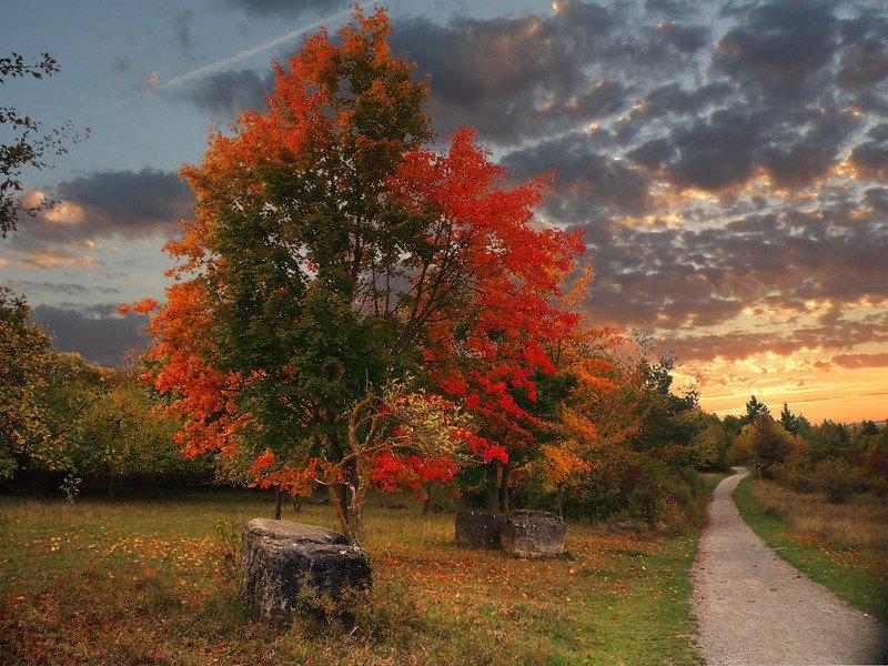 красочная осеньphoto preview