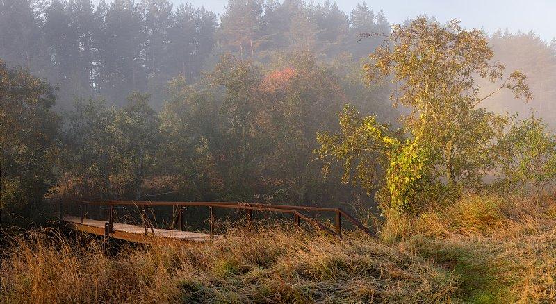 мостик природа туман утро Про мостикphoto preview