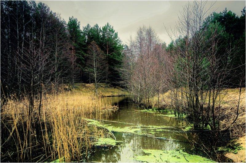 Тихое место.photo preview