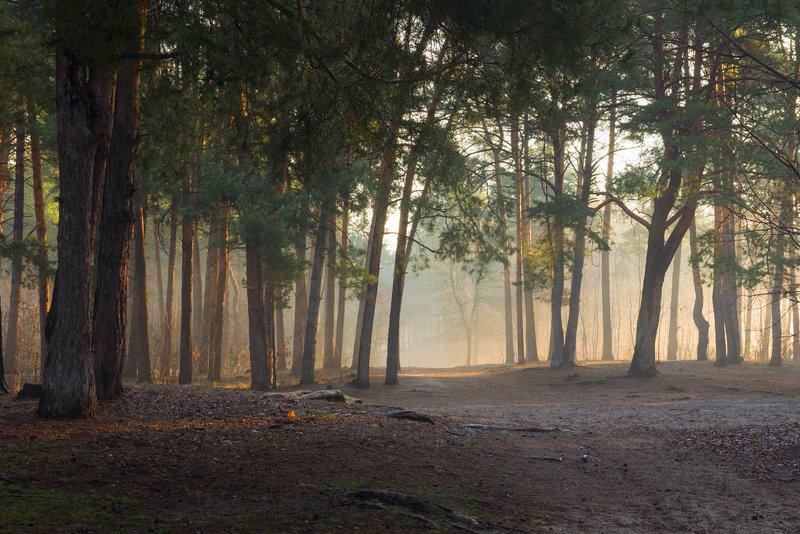 лес, весна, март, утро, рассвет, туман, испарина Мартовский рассветphoto preview