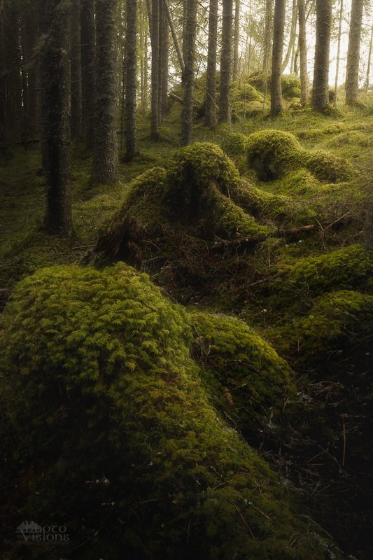 forest,woodland,green,moss,tree,trees,norway,boreal,norwegian,north Light pathphoto preview