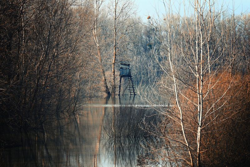 landscape, nature, flood, slovakia, photography, water, forest, trees, winter, naturephoto Floodphoto preview