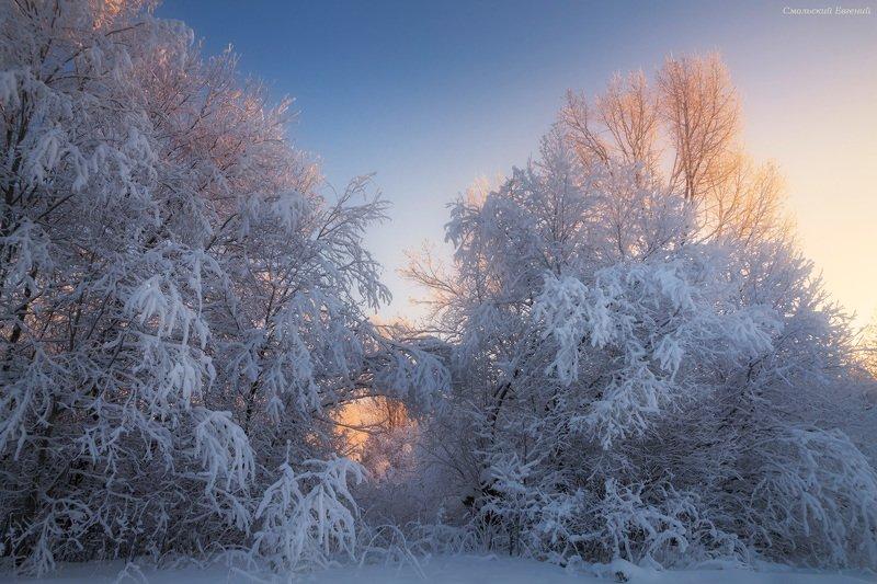 зима, закат, вечер, снег, лес, иней, мороз, кусты Портал в волшебный мирphoto preview