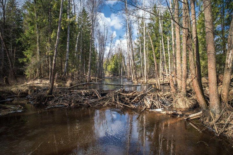 весна,лес,река,небо,облака.отражение,запруда лесные протокиphoto preview