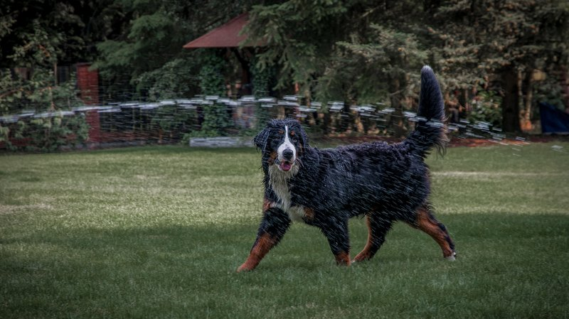 псы,собака,собачки,животные,собаки Летняя жара #2photo preview