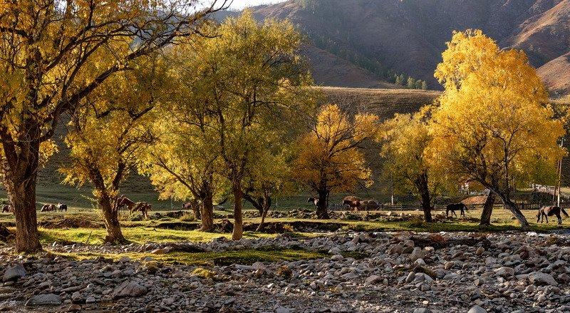 алтай, ручей, осень. Обычный алтайский вечер.photo preview