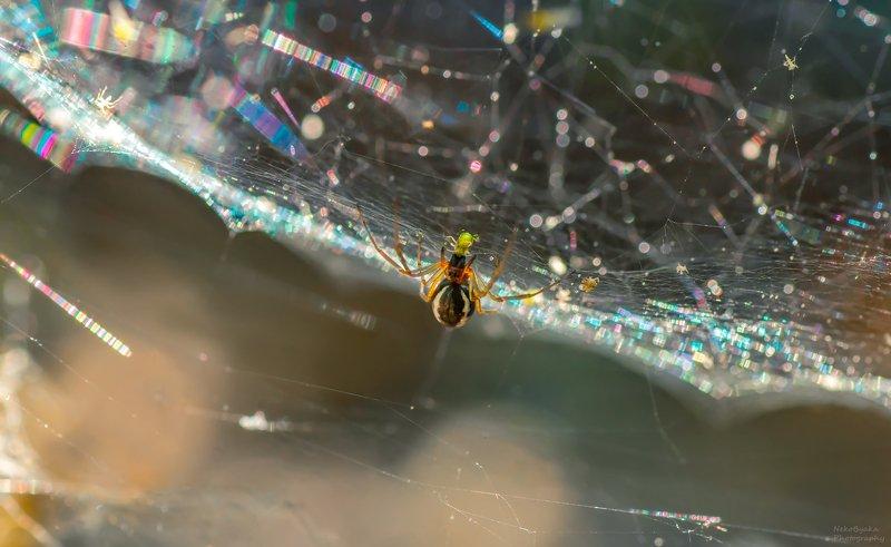 макро, природа, насекомые, тля, паук, паутина, блики, боке, солнце, macro, nature, insects, aphid, spider, spiderweb, glare, bokeh, sun, Завтрак на радугеphoto preview