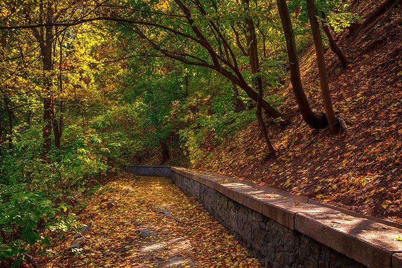 landscape, пейзаж, лес,  деревья, солнечный свет,  солнце, природа, парк,  прогулка, дорожка осенний паркphoto preview