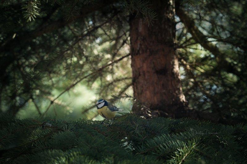 природа, лес, животные, птицы Весна пришлаphoto preview
