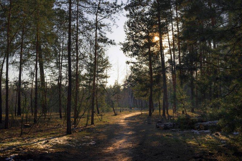 лес, весна, март, вечер Стоит недвижно и безмолвно лес прозрачныйphoto preview