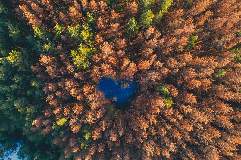 Сердце природыphoto preview