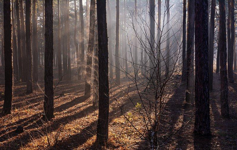 landscape, пейзаж, утро, лес,  деревья, солнечный свет,  солнце, природа, солнечные лучи,  прогулка, утроphoto preview