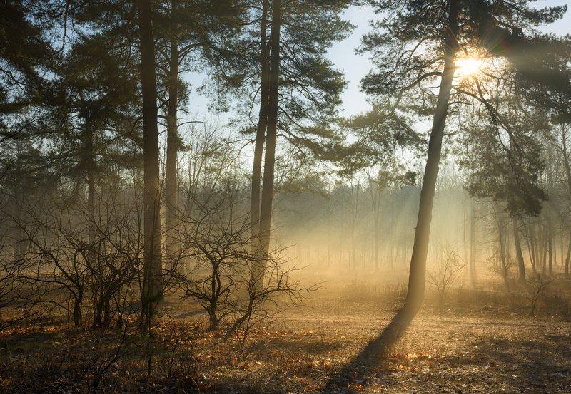 лес, весна, март, утро, рассвет, лучи, туман, испарина Однажды на рассветеphoto preview
