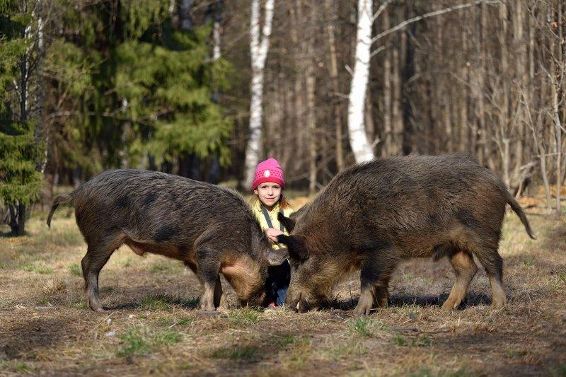 лес,весна,ребёнок.кабаны повелительница животныхphoto preview