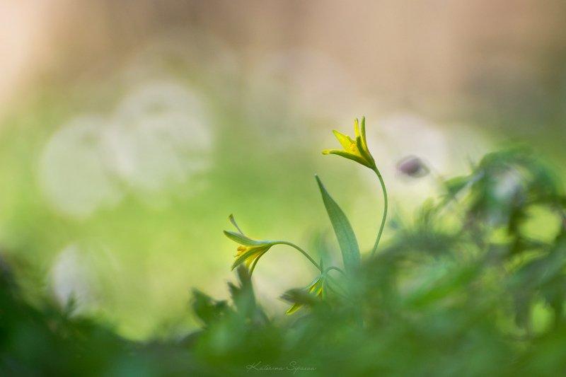 природа, весна, цветы Красота в простомphoto preview