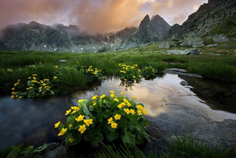 mountains, retezat, romania, sunset, landscape, nature, travel, summer, peak, clouds, flowers In Paradisephoto preview