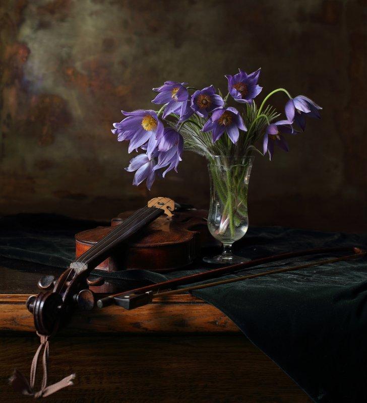 весна, цветы, скрипка, музыка Весенний этюдphoto preview