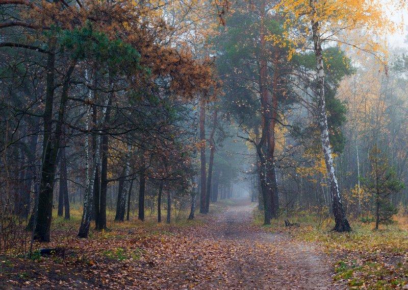 лес, осень, ноябрь туман Подножье леса – в листьях палых и – словно пропасть – тишина...photo preview