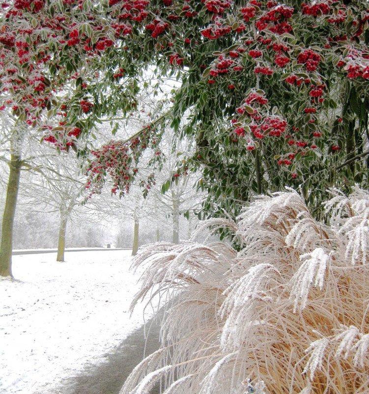 зимние ягодыphoto preview