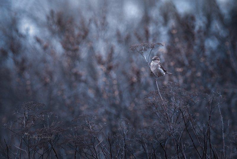 природа, лес, животные, птицы Ранняя пташкаphoto preview