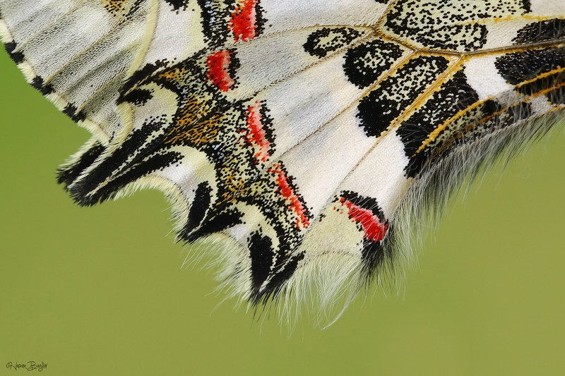 #butterfl#wing#detaıls#macro#nature#northcyprus Wovenphoto preview