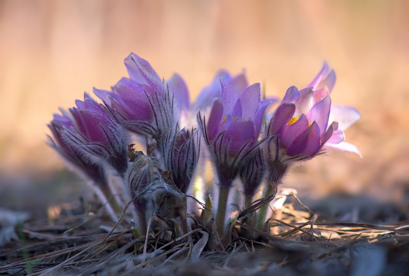 весна, цветы, сон-, трава Весенний хороводphoto preview
