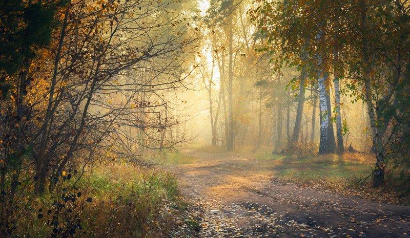 лес, осень, октябрь, утро, рассвет, туман Золото рассветаphoto preview
