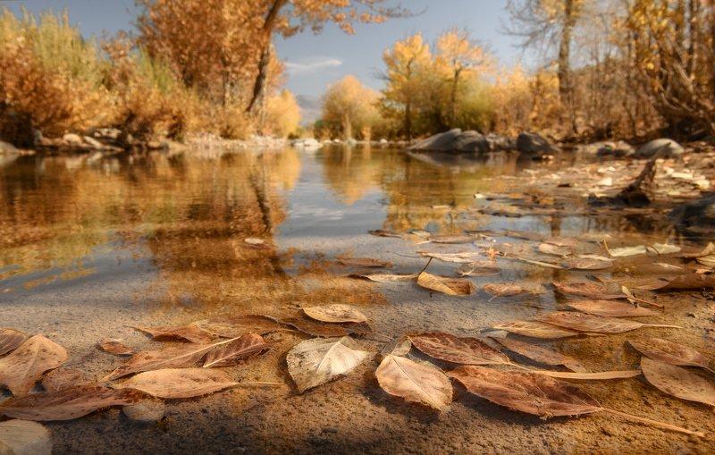 алтай, ручей, осень. Листья осени.photo preview