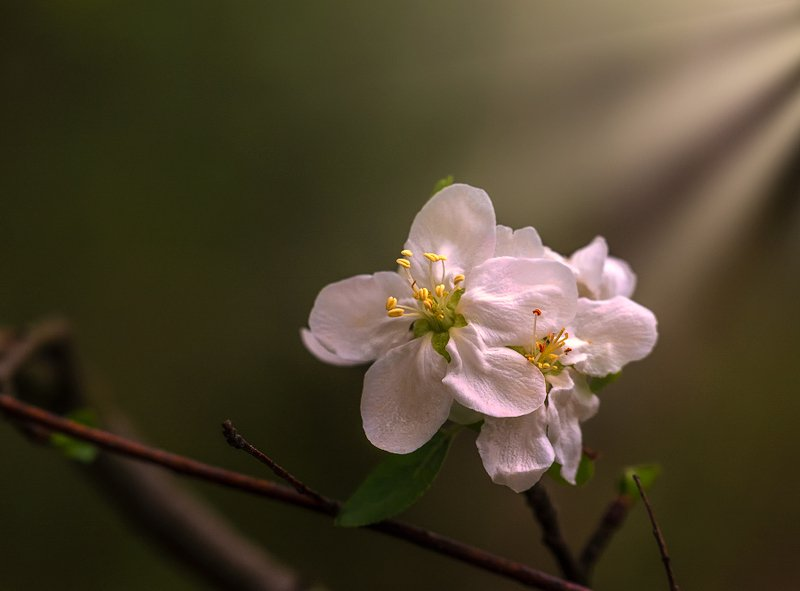 nature, природа, весна, цветы, весенние картинкиphoto preview