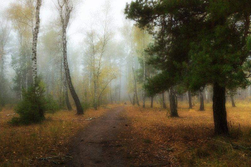 лес, осень, октябрь, утро, рассвет, туман Сглаживая реальностьphoto preview