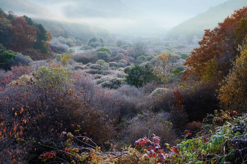south korea, gangwondo, autumn, mountain, nature, morning, rime ice, fog, forest, A natural gardenphoto preview