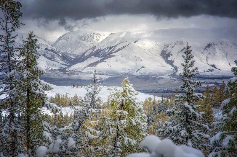 алтай,горы сквозь елиphoto preview
