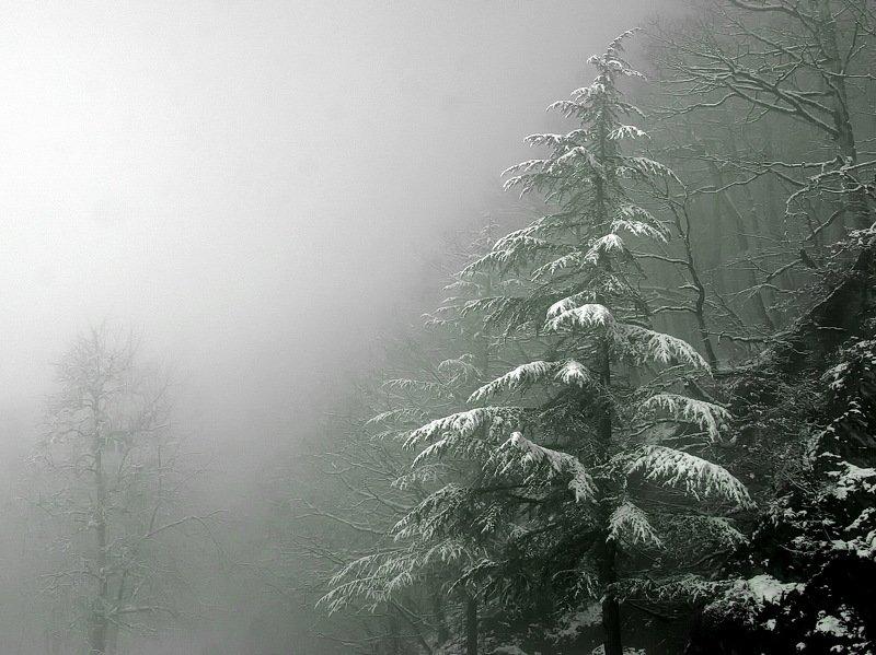 весна туман дерево Март.photo preview