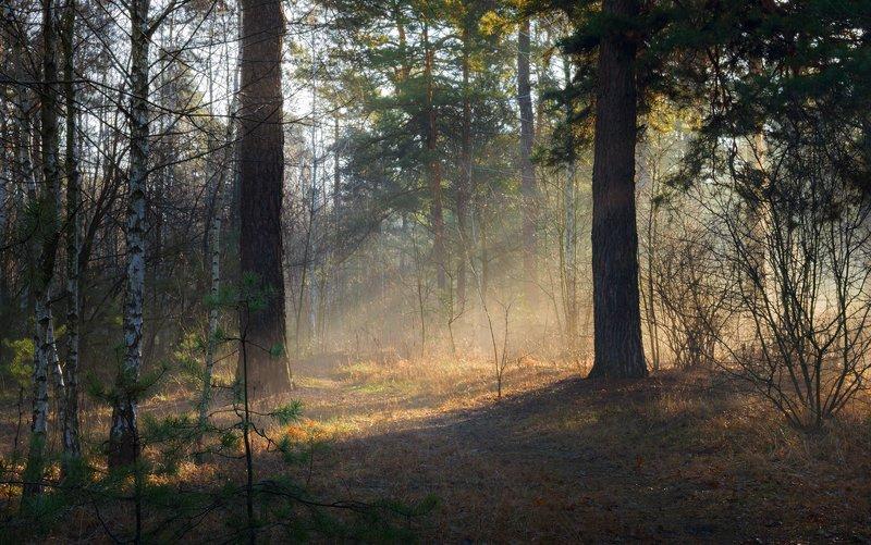 лес, весна, март, утро, рассвет, лучи, туман, испарина В ожиданье теплаphoto preview