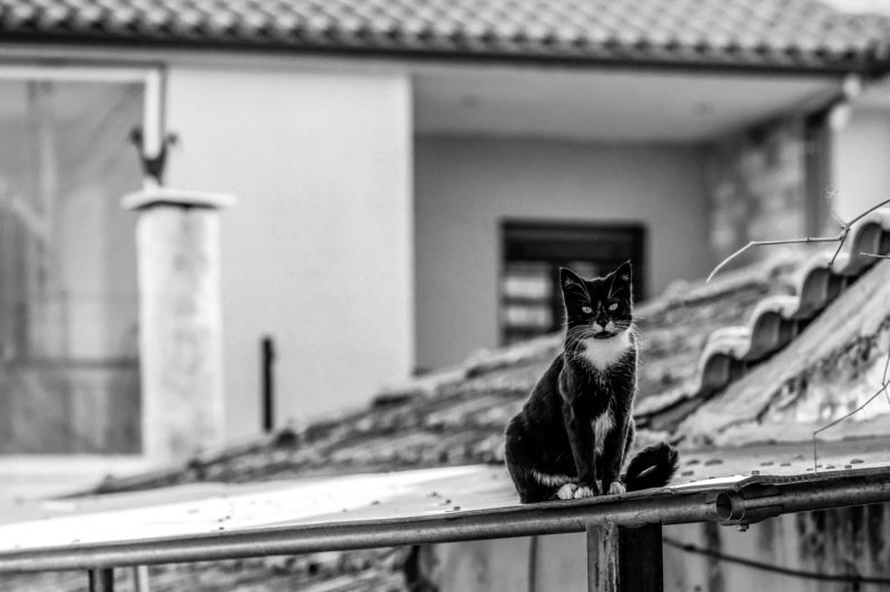 Тише, мыши, кот на крышеphoto preview