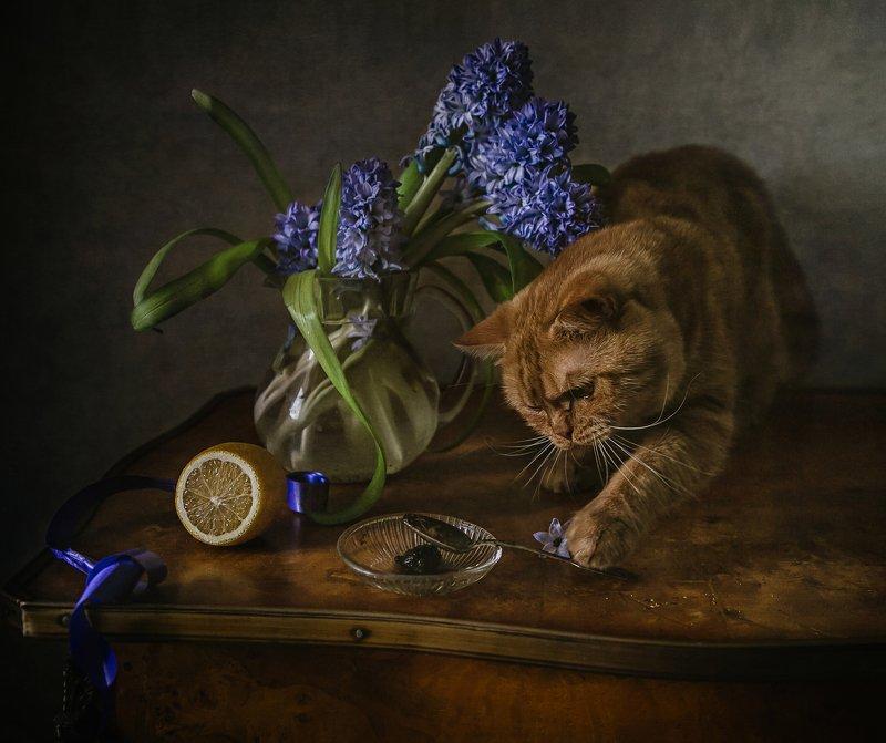 натюрморт, стекло, цветы, гиацинты, лимон, животные, кот Про Рыжика и гиацинтыphoto preview