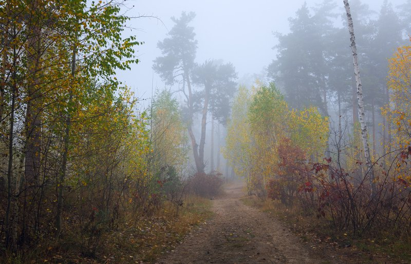 лес, осень, октябрь, утро, рассвет, туман И колдовством тумана лес окутанphoto preview
