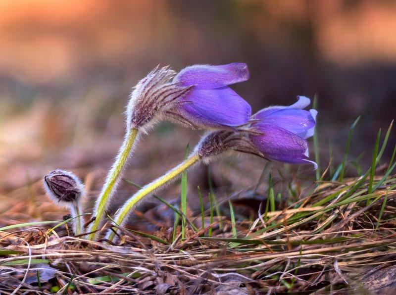 весна, цветы, сон-, трава От рассвета до закатаphoto preview