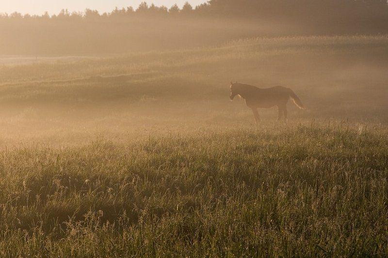 утро, туман, лошадь Встретить солнце...photo preview