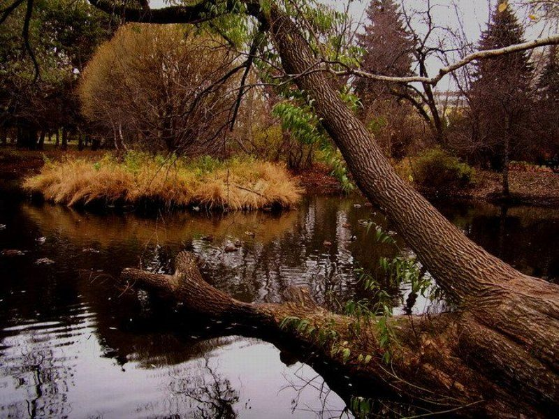 осень, парк Осенний паркphoto preview