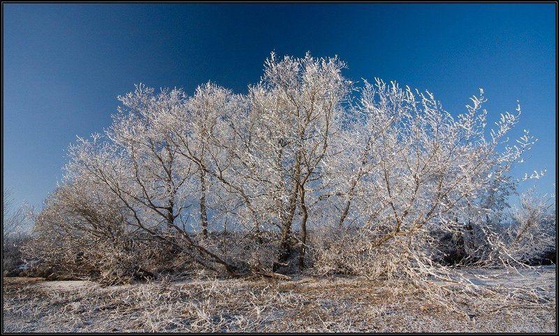 зима, иней, небо, i_go Немного зимы...photo preview