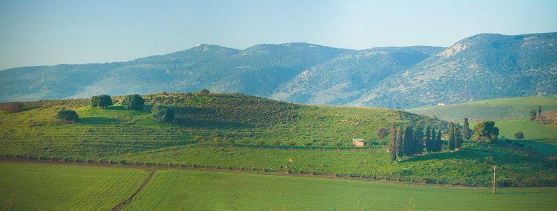 Израильская    Тоскана.photo preview