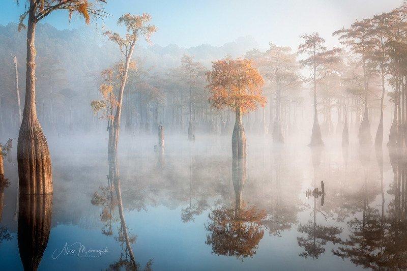 кипарис, туман, болото, отражение, фото-тур, Утренний туман на кипарисовом болотеphoto preview