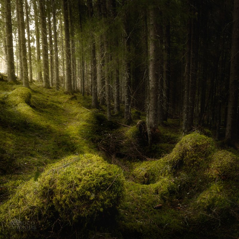 woods,woodland,forest,magic,moss,mossy,green,norway,boreal,norwegian,northern Fairyland dreamphoto preview