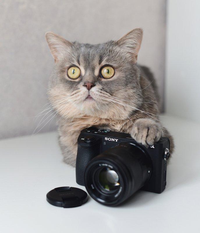 Photographerphoto preview
