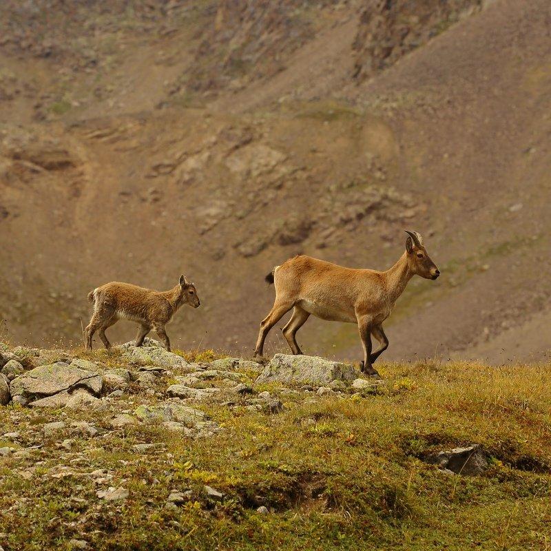 Западнокавказские турыphoto preview
