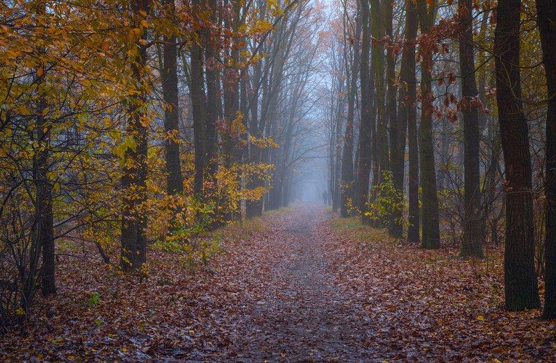 лес, осень, ноябрь, туман, белый, тропа Печальны тропы в ноябреphoto preview