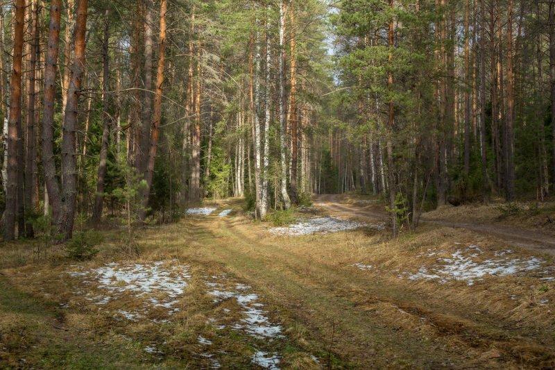 лес весна снег дорога Последний снегphoto preview