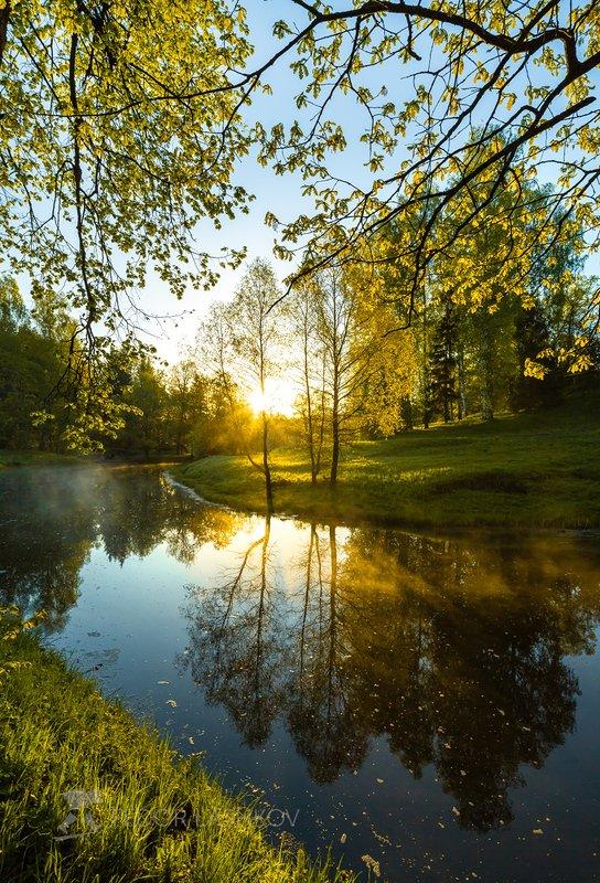 парк, река, санкт-петербург, павловск,  отдых, прогулка, дерево, деревья, ива, рассвет, липа, отражение, солнце, весна, весенний, Весенняя листваphoto preview